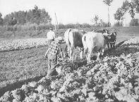 Produzione carne